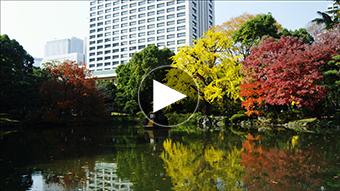 環境映像東京オータムイメージ