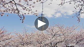 環境映像東京スプリングイメージ