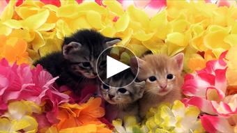 ペット環境映像猫イメージ
