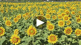 環境映像花イメージ