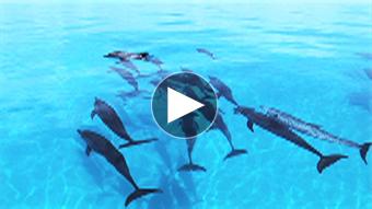 環境映像イルカイメージ