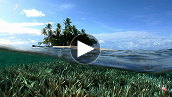 環境映像南の島イメージ