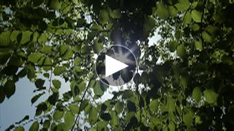 環境映像清流、新緑、滝イメージ