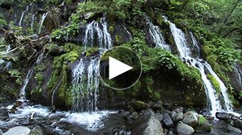 環境映像新緑、滝、渓流イメージ