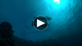 環境映像人魚イメージ