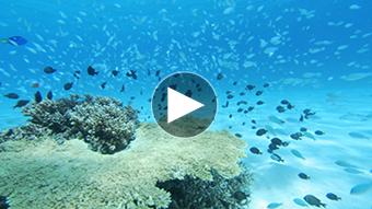 環境映像水中イメージ