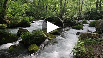 環境映像新緑の奥入瀬渓流イメージ