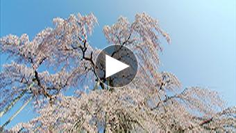 環境映像春 SPRING12イメージ